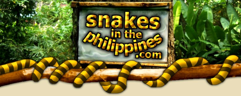 Venomous Snakes in the Philippines